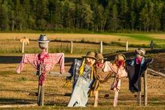 färgrika scarecrows Arkivfoton