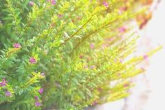 Färgrika sidor av sommar för abstrakt bakgrund Arkivfoton