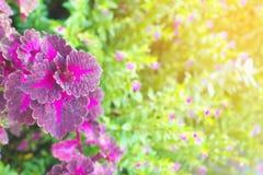 Färgrika sidor av sommar för abstrakt bakgrund Royaltyfri Fotografi