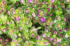 Färgrika sidor av sommar för abstrakt bakgrund Fotografering för Bildbyråer