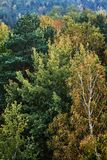 Färgrika sidor av träd under höst Arkivbild