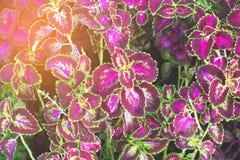 Färgrika sidor för abstrakt bakgrund Fotografering för Bildbyråer