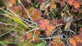Färgrika sidor för höst på bakgrund för grönt gräs Top beskådar Blöta gula höstsidor på grönt gräs, bästa sikt brigham arkivbild