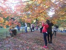 Färgrika sidor för lönnträd i Central Park Royaltyfri Foto