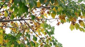 Färgrika sidor i hösten stock video