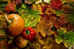 Färgrika sidor och grönsaker arkivbilder
