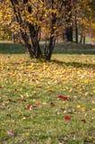 Färgrika sidor på gräs Fotografering för Bildbyråer