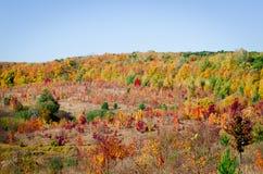 Färgrika sidor på träd i höstskog royaltyfria bilder