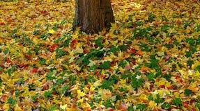 Färgrika sidor runt om ett träd på jordningen royaltyfria foton