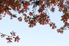 Färgrika sidor spred ut från nedersta sikt av trädet Arkivfoton