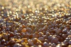 Färgrika skal och musslor på den Stillahavs- stranden, San Diego Fotografering för Bildbyråer
