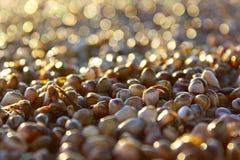 Färgrika skal och musslor på den Stillahavs- stranden, San Diego Royaltyfria Bilder