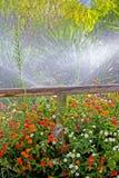 färgrika staketblommor omgav trä Royaltyfri Fotografi