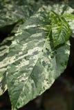 Färgrika stora tropiska sidor Exotiska härliga växter arkivfoton