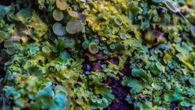Färgrika svampar Royaltyfri Foto