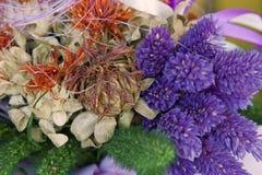 färgrika torkade blommor Fotografering för Bildbyråer