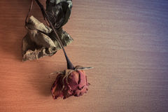 Färgrika torkade rosor som förläggas på ett trä Arkivbilder