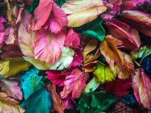 Färgrika torra blommasidor Arkivbild