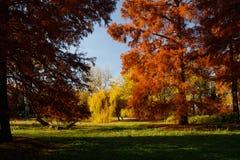 Färgrika träd för höst i parkera fotografering för bildbyråer