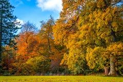 Färgrika träd i ändringen Royaltyfri Fotografi