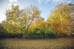 Färgrika träd i en lantlig miljö Arkivfoton