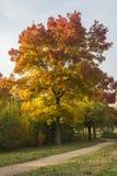 Färgrika träd i en parkera Fotografering för Bildbyråer