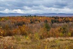 Färgrika träd i höstskog i berg Royaltyfri Foto