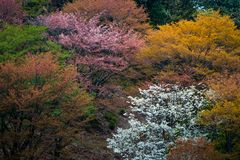 Färgrika träd i Japan arkivfoto