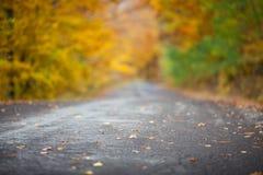Färgrika träd nära vägbakgrunden Fotografering för Bildbyråer