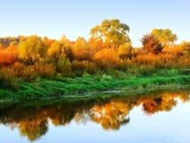 Färgrika träd på floden i höst Arkivbilder