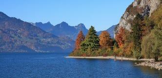Färgrika träd på kusten av sjön Walensee, Schweiz autum fotografering för bildbyråer