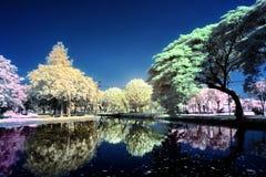 Färgrika träd på sjön Royaltyfria Bilder
