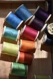 Färgrika trådar i den wood asken sköt med makrolinsen Royaltyfri Foto