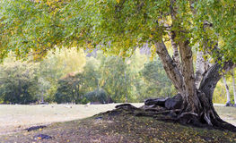 färgrika trees Royaltyfria Foton