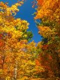 färgrika trees Arkivfoto