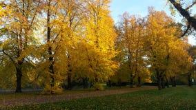 färgrika trees Royaltyfri Bild