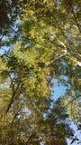 färgrika trees royaltyfri fotografi