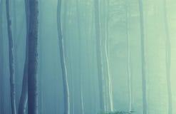 färgrika trees för dimmaskogmorgon royaltyfria bilder