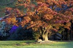 färgrika trees för höst Arkivfoto