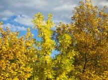 färgrika trees för höst Royaltyfri Foto