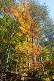 färgrika trees för höst Höstlandskapbakgrund Royaltyfri Foto