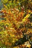 färgrika trees för höst Höstlandskapbakgrund Royaltyfri Fotografi