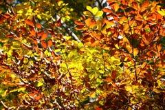 färgrika trees för höst Höstlandskapbakgrund Royaltyfria Foton