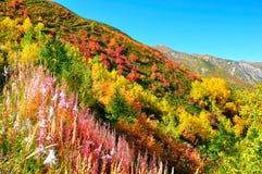Färgrika trees, Svaneti Georgia Arkivbilder