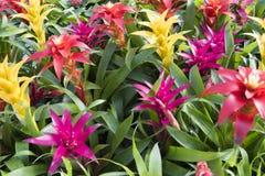 Färgrika tropiska blommor Arkivbilder