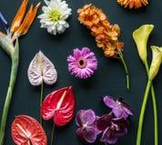 Färgrika tropiska blommor på svart bakgrund Royaltyfri Fotografi