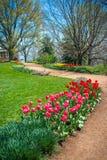 Färgrika Tulip Path Fotografering för Bildbyråer