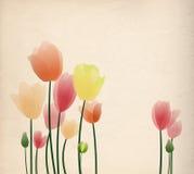 färgrika tulpan vektor illustrationer