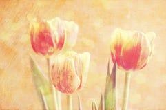 Färgrika tulpan för vår Arkivbilder