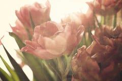 Färgrika tulpan för vår Arkivbild